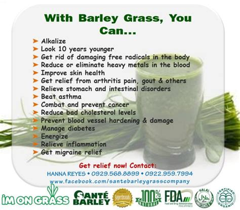 Barley Detox by Need To Detox Cleanse And Nourish With Barley With Sante