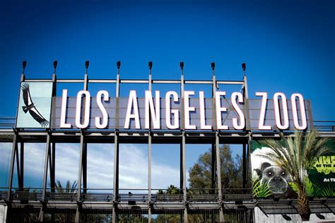 los angeles zoo los angeles county zoo and botanical garden even giraffes seem fake in l a mondo bastardo