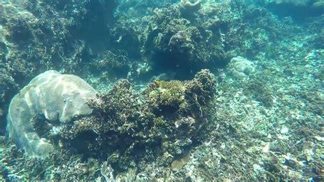 Gopro 4 Thailand koh tao koh nang yuan snorkeling august 2015 thailand gopro 4 silver