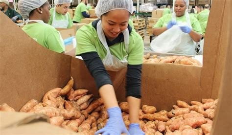 Chicago Food Pantry Volunteer by Greater Chicago Food Depository Chicago S Food Bank