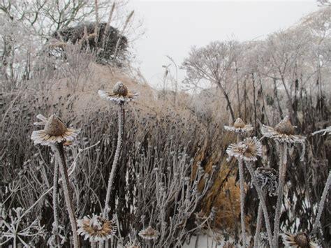 Uniblok Canada Gardenia In Winter 28 Images Vermont S Poor S
