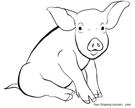 how to a pig how to draw a pig your drawing lessons