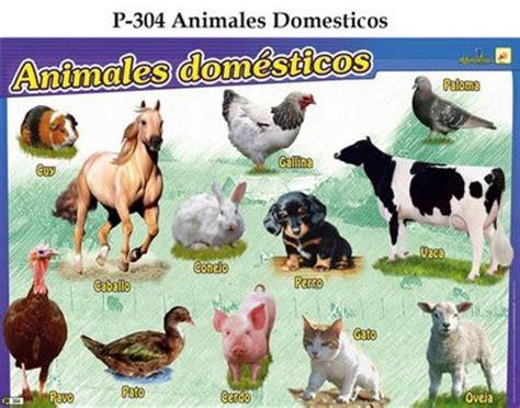 imagenes de animales salvajes y domesticos animales domesticos