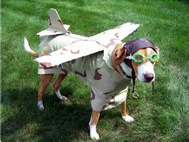 airlines that allow dogs pet friendly airlines pet travel checklist safest and cheapest fares