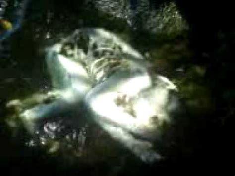 imagenes reales de nahuales nahual encontrado en lalagua de catemaco veracruz youtube