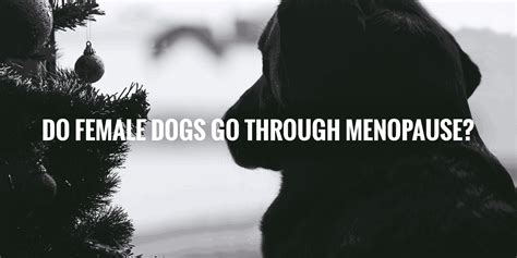 do dogs go through menopause do dogs go through menopause answer no