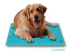comfortable temperature for dogs canine cooler a convenient and safe way to ensure a
