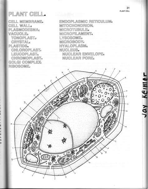 biology 1 cm 5 comparing cells