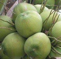 Obat Cacing Buat Tipes kumpulan informasi unik dan menarik manfaat kelapa muda obat tipes demam tifoid