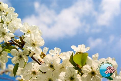ci di fiori foto fiori di primavera consegna mazzi di fiori e piante a