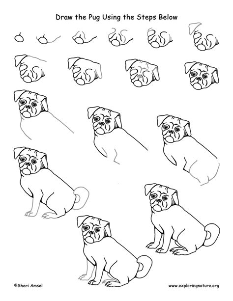how to draw pugs step by step pug drawing lesson