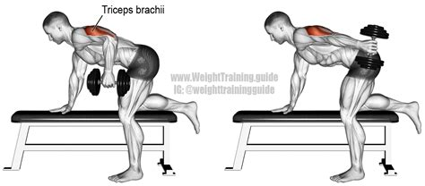 tricep kickbacks on bench dumbbell kickback exercise instructions and video weight training guide