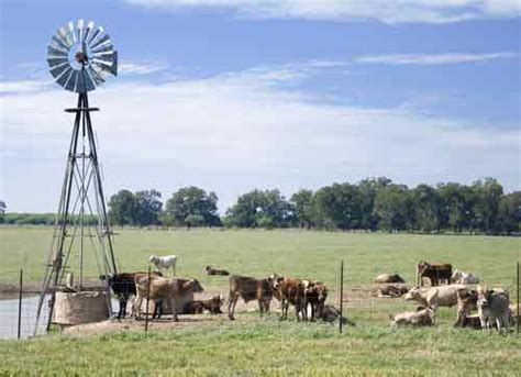 animal farm new windmills early life memories and how to make mayonnaise from scratch