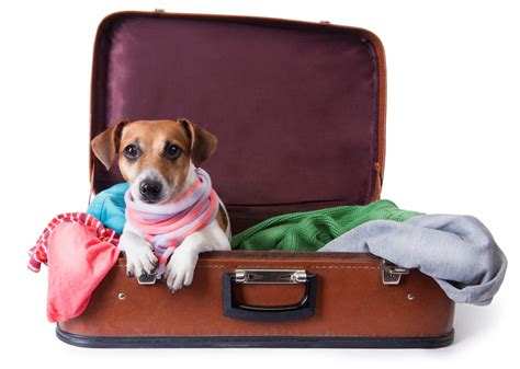 traveling with dogs pet relief areas metropolitan washington airports authority