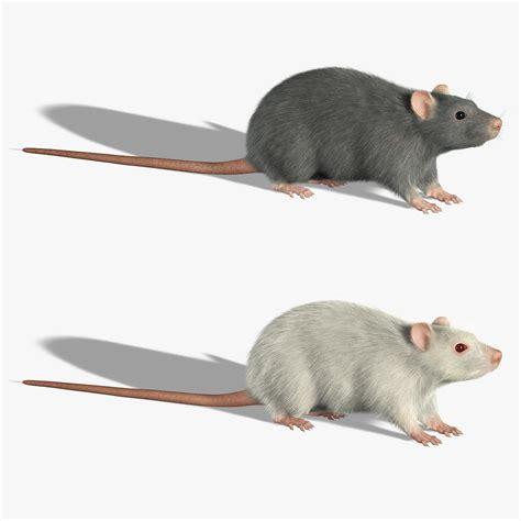 3d Rat Model 3d rats fur model