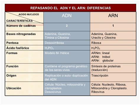 numero de cadenas del adn biologia acidos nucleicos
