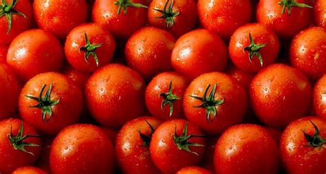 alimentos ricos en vitamina 15 alimentos ricos en vitamina e