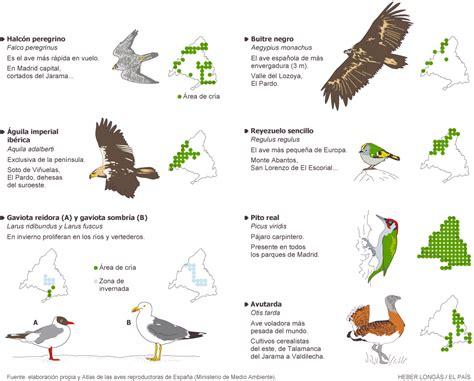 aves de espaa y aves de importancia mundial y local en madrid madrid