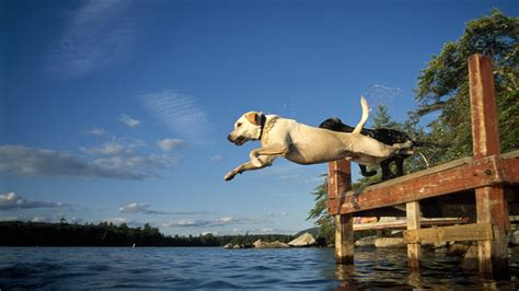 puppy jumping jumping into lake wallpapers 1920x1080 548043