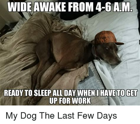 my puppy sleeps all day wide awake from 4 6am ready to sleep all day when i to get up for work my the