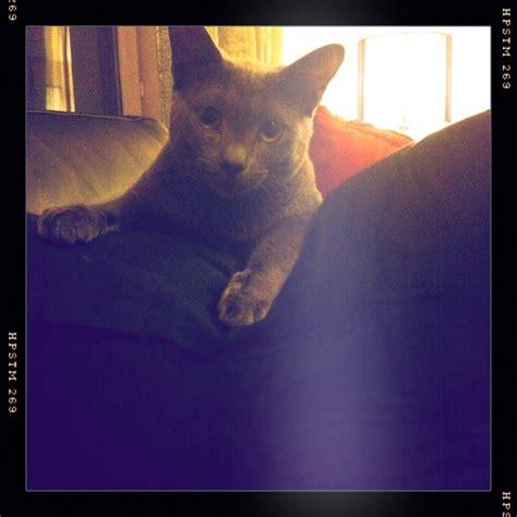 film blue russian russian blue cat hipstamatic lucas ab2 lens pistil film