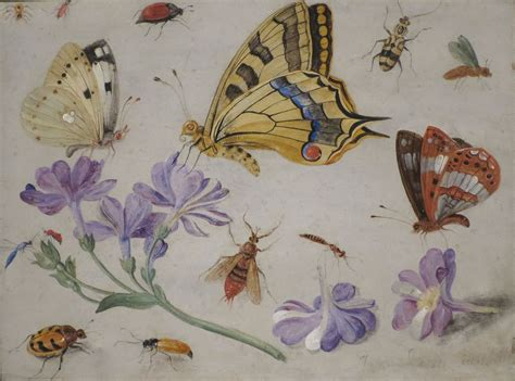 insects and flowers the file butterflies other insects and flowers by jan van kessel 1659 high museum of art jpg