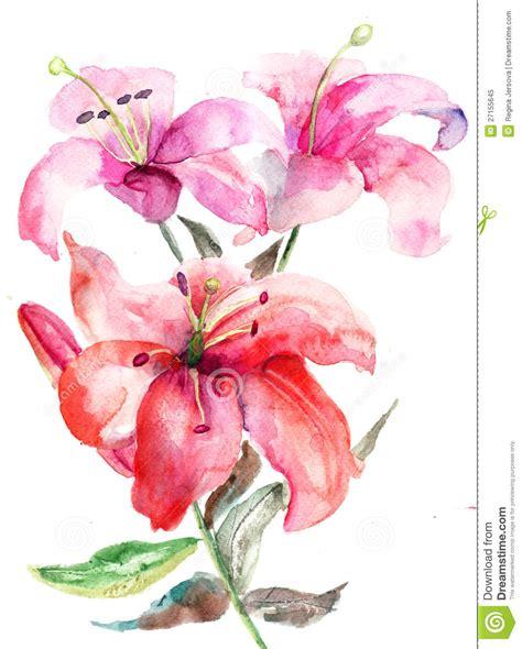 flores del lirio ilustraci 243 n de la acuarela stock de