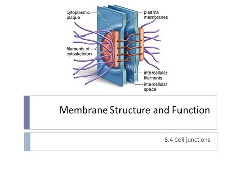 Structure And Function Of Membranes Essay by Occult Atherosclerotic Disease Diagnosis Assessment And Management 1991