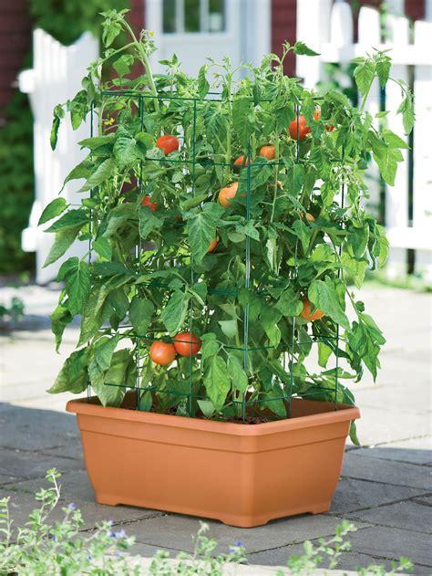 Tomatoe Planters by Tomato Automators 4 Ways To Protect Your Tomato Plants