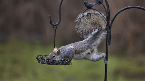 Bird Feeders Raleigh Feeding Birds Not Squirrels In Fall And Winter Seasons