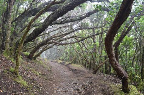 el bosque encantado 841527873x sendero el bosque encantado santa cruz de tenerife 2018 qu 233 saber antes de ir lo m 225 s