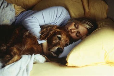 dogs that like to cuddle 11 reasons why we should always be thankful for dogs urdogs