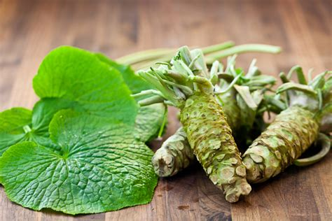 Hardest Plant To Grow | wasabi the hardest plant to grow in the world spoon