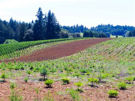 christmas trees with farms for sale tree farm property for sale in oregon