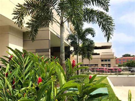 decoracion de jardines pequeños con palmeras jardines urbanos huertos urbanos jardines verticales o