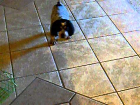 dog training pooping in the house how i punish my dog for pooping in the living room funnydog tv
