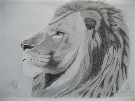 dibujos realistas en lapiz the gallery for gt dibujos a lapiz de leones