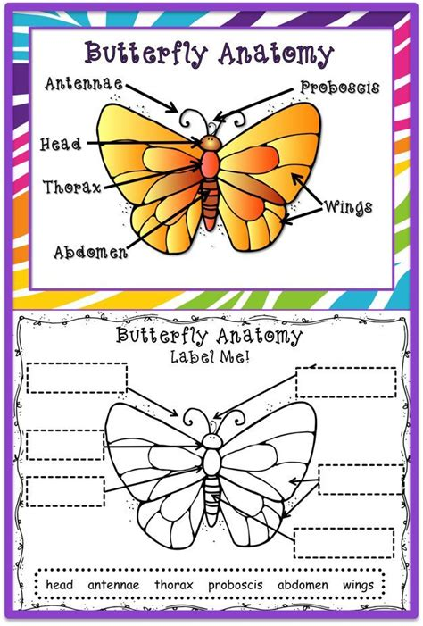 the butterfly s journey what is autism an autism awareness children s book difficult discussions autism asperger s special needs children autism books for autism books books butterfly cycle worksheets for grade 1000