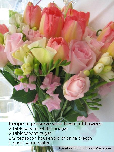 flower preservative recipe cut flower preservative recipes about review ebooks