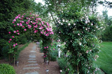 Garden Arbor Path Quot The Pink Roses On The Arbor Are Zephirine Drouhin