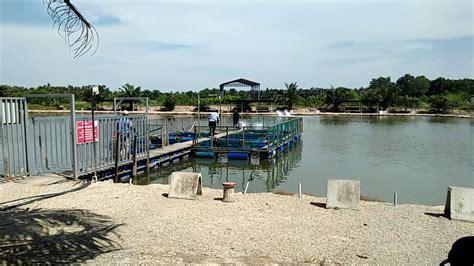 kolam pancing air masin sungai rambai melaka youtube