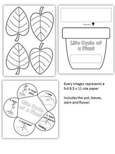 Plant Life Cycle Art Activity Template | Life cycles