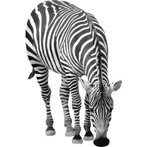 zebra pattern meaning zebra meaning of zebra in longman dictionary of