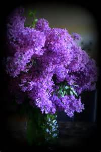Affordable Duvet Lilac Bouquet Photograph By Kay Novy