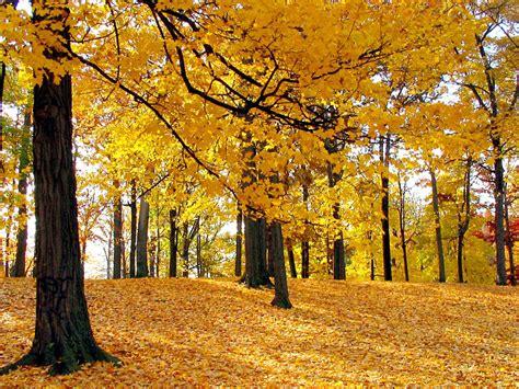tappeto di tappeto di foglie paesaggi sfondi desktop gratis