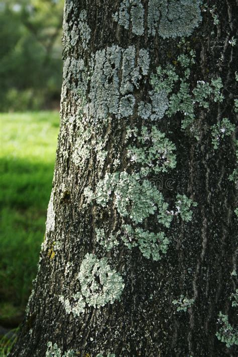 tree bark with fungus stock image image of tree fungus