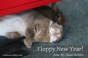 new year rabbit floppy new year from my house rabbit my house rabbit