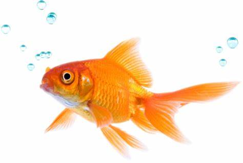 fish jump wallpapers   DriverLayer Search Engine