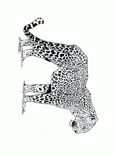 guepardo dibujos  colorear dibujoscom