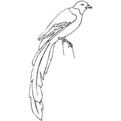 magpie bird coloring page magpie bird colouring pages page 2